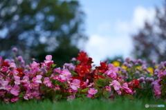 秋色・小さなお花たち