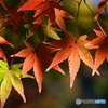 竈門神社の秋3