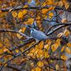 秋色の中で