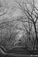 那須塩原温泉散歩(栃木)