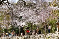 春の宮島④