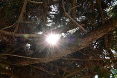 松の木の隙間から