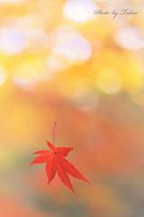 ゆ~らりゆらりと揺れる落ち葉に誘われて