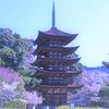 花咲く瑠璃光寺