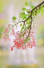 ピンクの藤もかわいい
