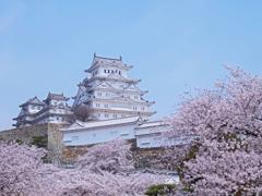 この位置からの城と桜が好き