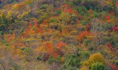 丹波紅葉めぐり 彩づく裾野