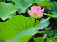 デンパークの花 2