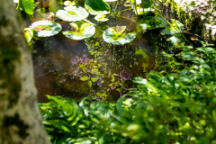 紫陽花46 湖面