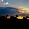 若草山山頂の鹿たちその23