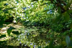紫陽花42 湖面