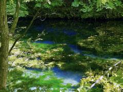 憧れの池…
