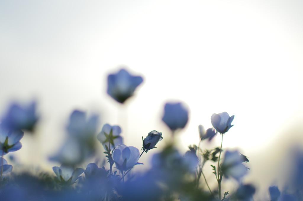 遅咲きの気になる存在