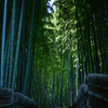 Through the bamboo forest