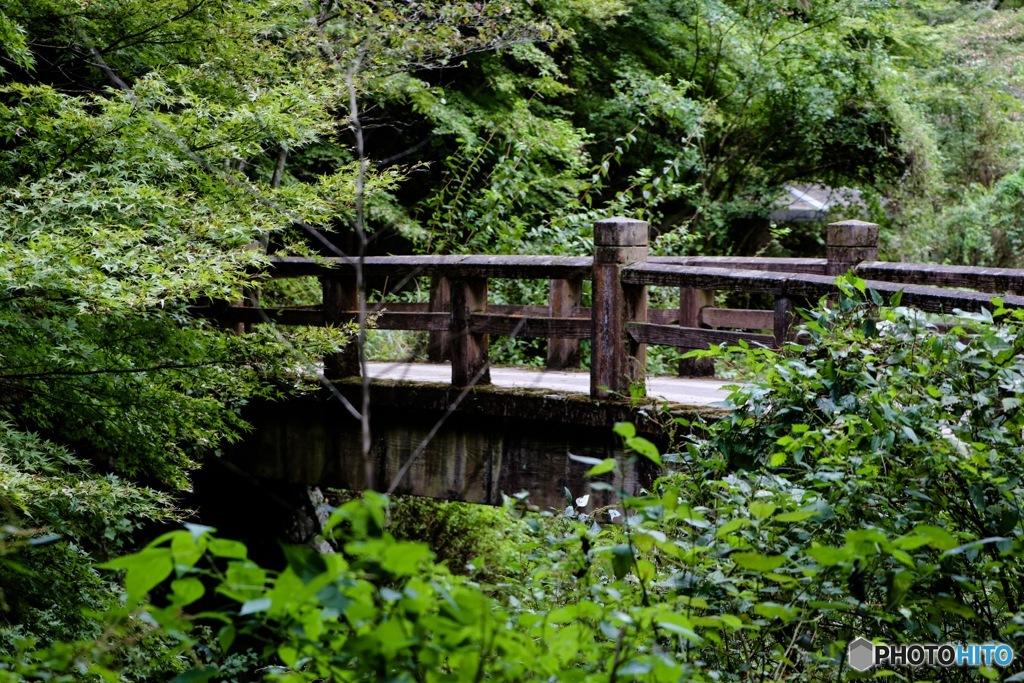 緑に囲まれた古い橋