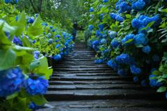 紫陽花の段