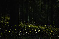 暗い森の光る幻想