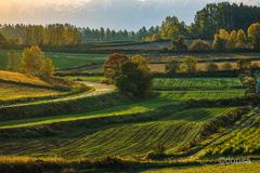 絵画のように美しく 〜美瑛の秋の朝