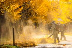 秋を片付ける