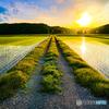 畦道と夕陽