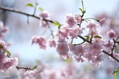 春の兆し ( year 2016 )