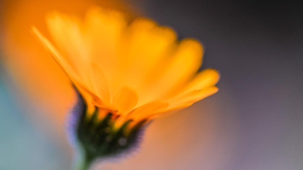 燃えている花