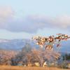 関田山脈残雪に咲く