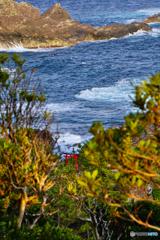 岬からみえる鳥居