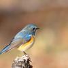 幸せを運んでくれる青い鳥