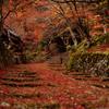 百済寺 血染めの紅葉