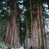 戸隠神社 雪の参道 杉並木
