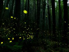 森のお祭り