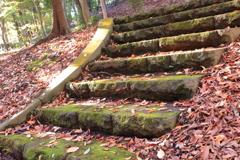 落ち葉に階段!秋ですね!