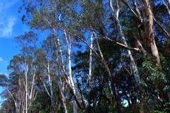 樹木に青空‥