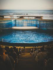 昔から変わらない江ノ島水族館