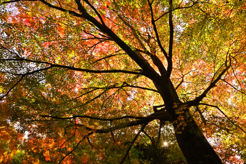 秋の奥出雲 9