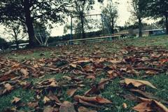 落ち葉とブランコ