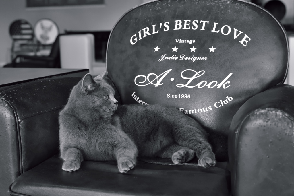 GIRL'S BEST LOVE