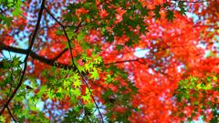 最上山公園~緑の紅葉2019