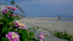 砂浜~江井ヶ島2015