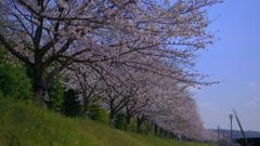 Sakura Namiki2020
