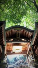 新緑の柔らかい光~鹿嶋神社2017
