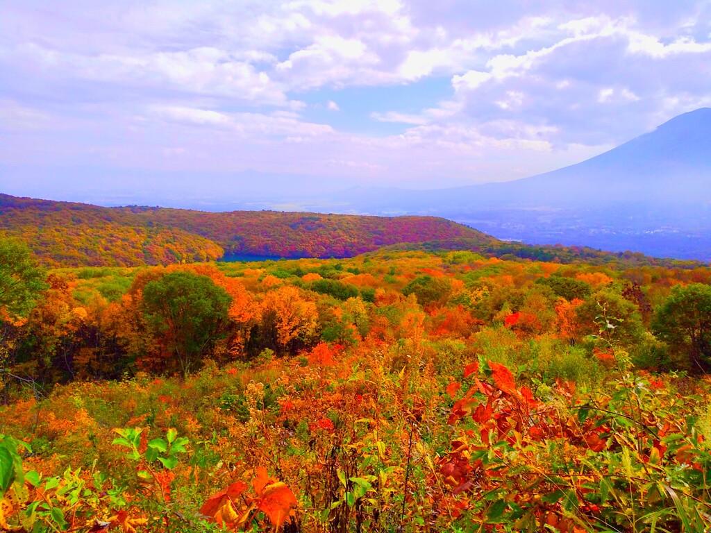 赤い秋  Roter Herbst