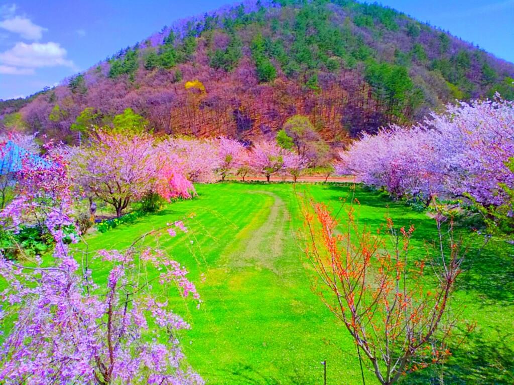 春を感じる Frühlingsgefühle