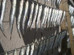 真鶴湾で水揚げされた魚の干物(大熊稔史)