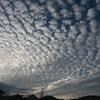 数年ぶりのうろこ雲