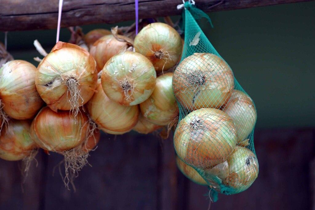 玉ねぎの季節
