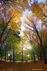 メープルの森