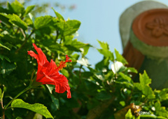 沖縄の空に咲く   週末ハート