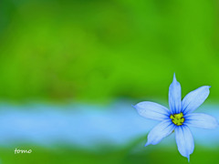 Blue Heart(s)